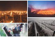 Mobilizare în Chablis pentru protejarea viilor de înghețul târziu de primăvară