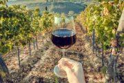 Producția de vin a României în 2019. OIV: Scădere de 4% față de anul precedent